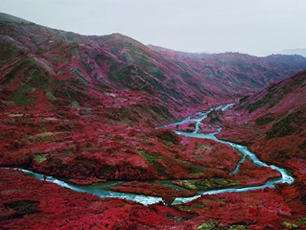 Richard Mosse, Love Is The Drug, 2012